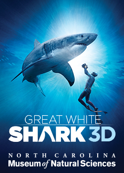 Great White Shark 3D Movie