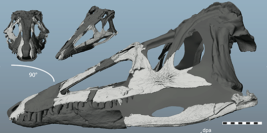 Reconstructed skull of Carnufex carolinensis