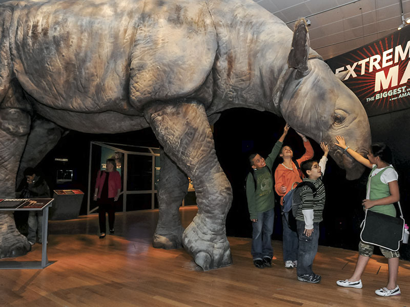 Kids with Indricotherium
