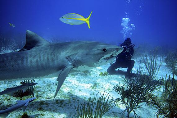 Shark Girl still: Madison Stewart filming tiger shark