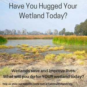 Have you Hugged Your Wetland Today? Wetlands save and improve lives. What will you do for YOUR wetland today?