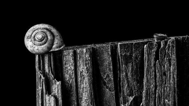 """Snail on a post"" by Timothy Faulkner, Kinston."