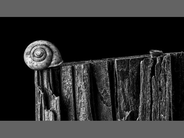 """Snail on a post"" by Timothy Faulkner, Kinston."