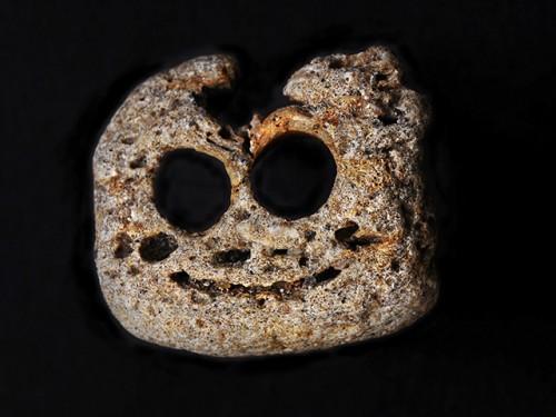 North Carolina marine fossil portraits debut at Nature Art Gallery