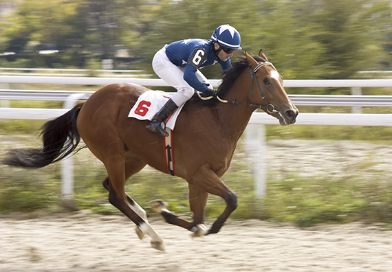 Racehorse running on track