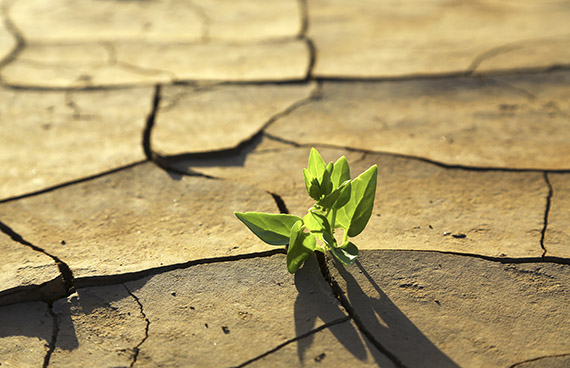 Plant growing through dry cracked soil