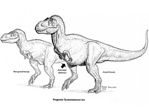 Pregnant T. rex Could Aid in Dino Sex-Typing