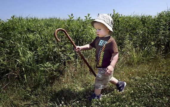 Cameron Brown, 2, struts with self assurance and his father's cane on a trail at North Carolina Museum of Natural Sciences' Prairie Ridge Ecostation on the 2015 Volksmarch.