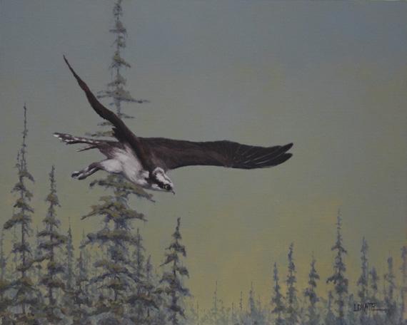 Osprey Flying by Lori White.
