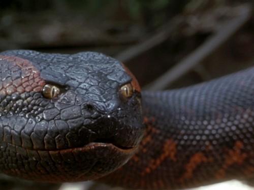 "It's a scream! Museum's Final Friday features ""Anaconda"" plus live boas, September 30"