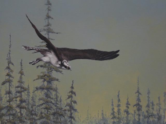 Osprey Flying by Lori White