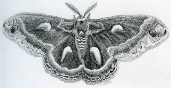 Moth by Patricia Savage