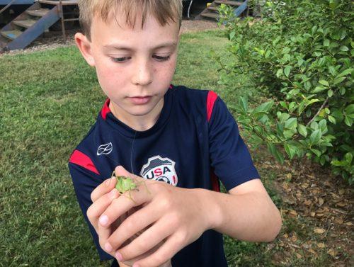 Boy holding a katydid.