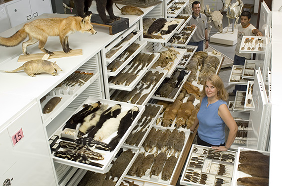 Inside the mammal collections at the NC Museum of Natural Sciences. Photo: Steve Exum.