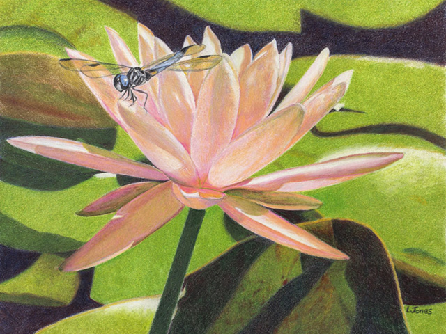 Water Lily by Linda Jones.