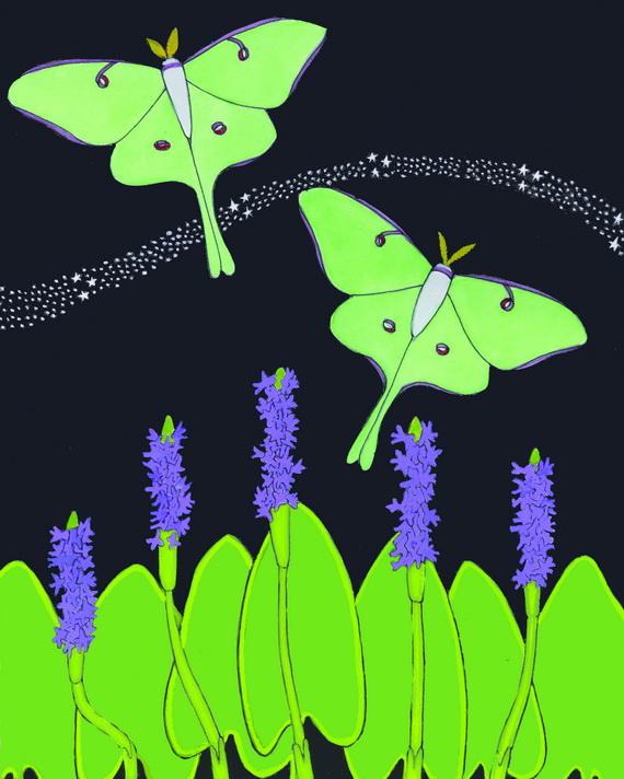 Luna Moths illustration by Bob Palmatier