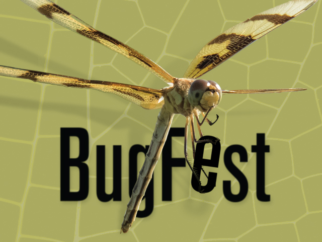 BugFest 2017 - dragonflies