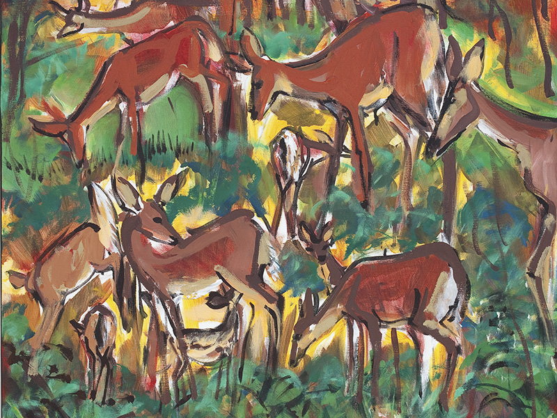 Deer Sketching by Shannon Bueker.