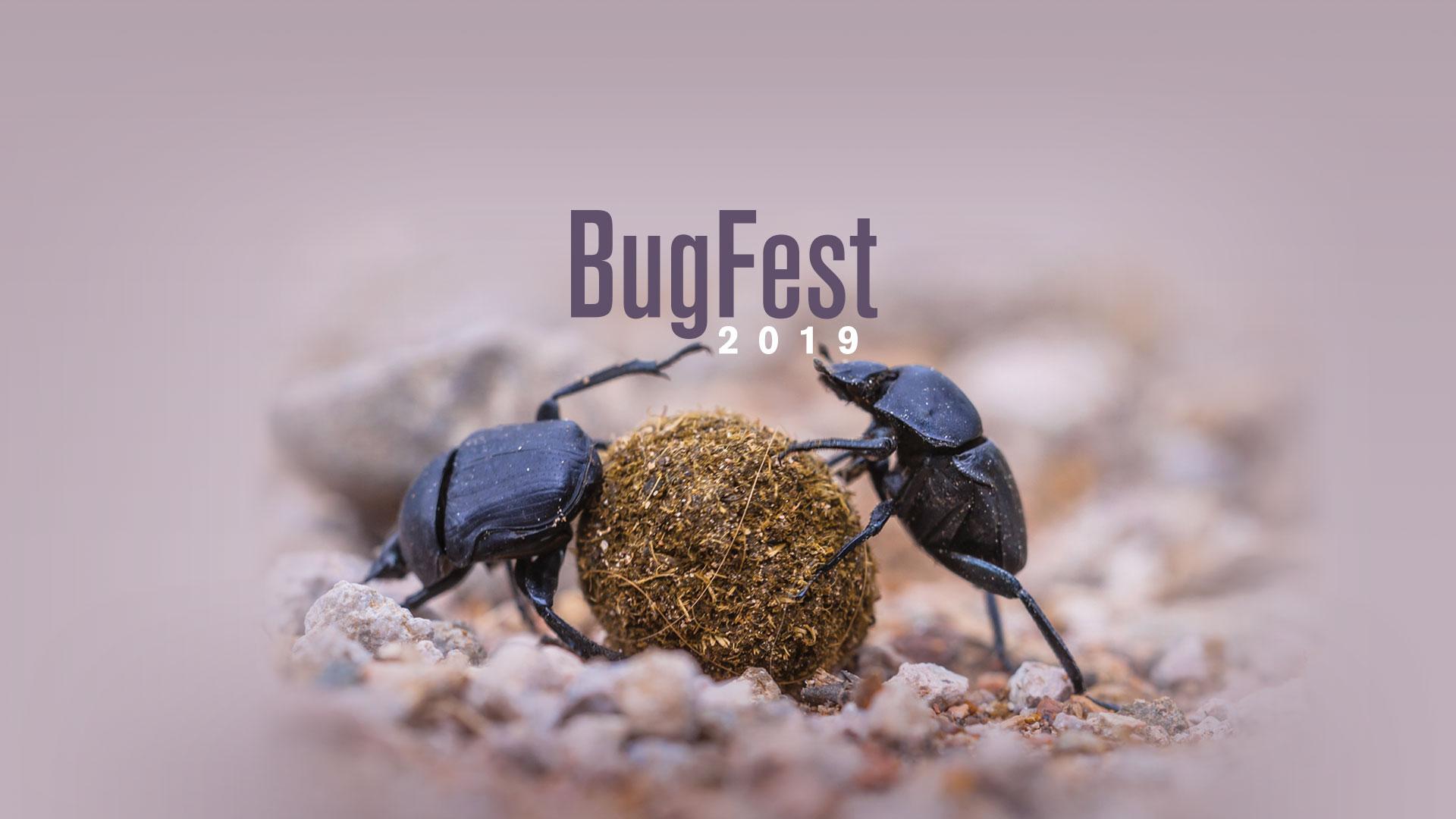 Bugfest: September 21, 2019