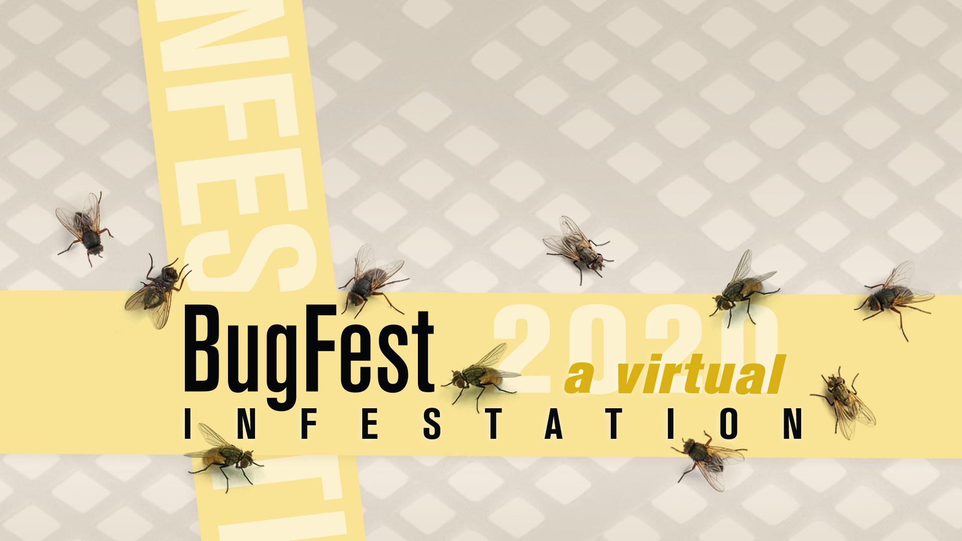 Bugfest 2020: A Virtual Infestation