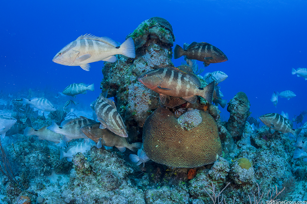 Gathering groupers