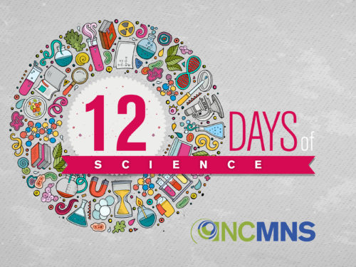 Celebrate 12 Days of Science at the NC Museum of Natural Sciences