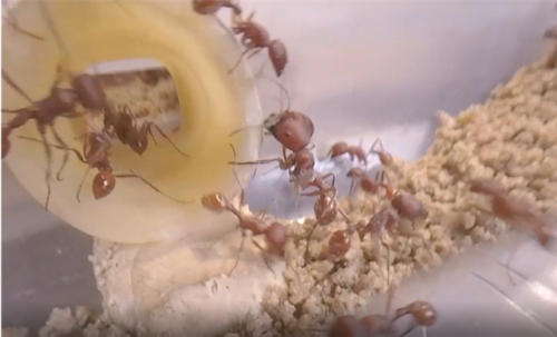 Investigate Ants