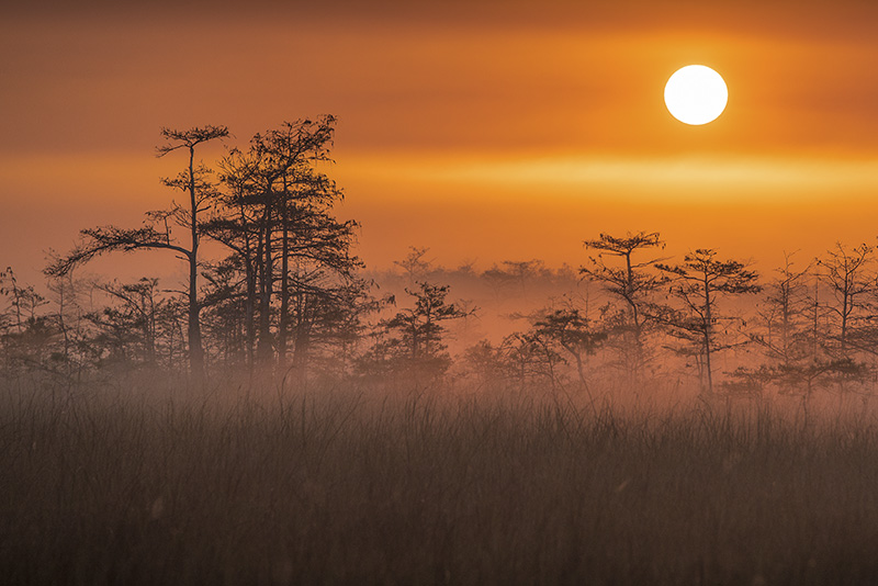 """Everglades in the Mist"" by William Howard."