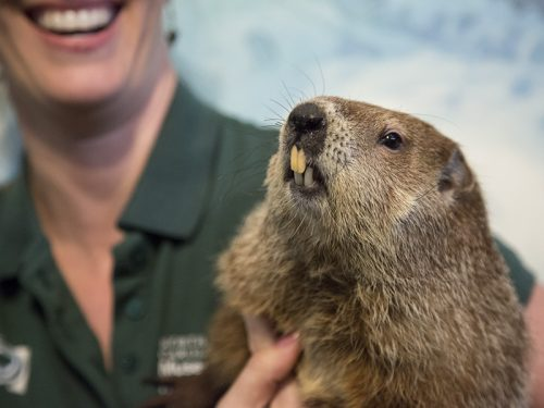 Sir Walter Wally accepts Groundhog Day challenge at Museum of Natural Sciences, Feb.2
