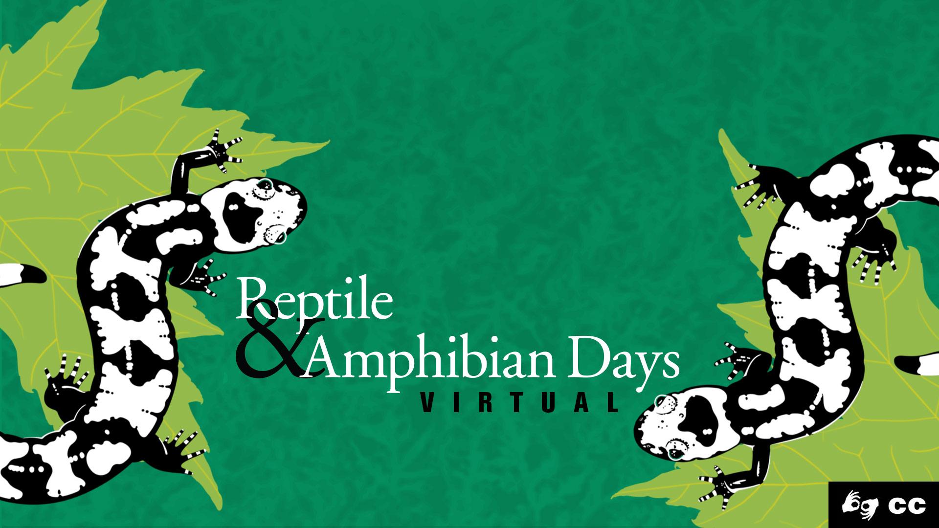 Virtual Reptile and Amphibian Days
