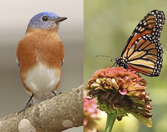Birds and Butterflies by Matthew Leavitt