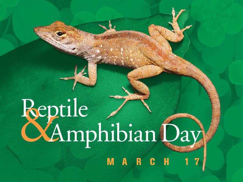 Reptile & Amphibian Day: March 17, 2018