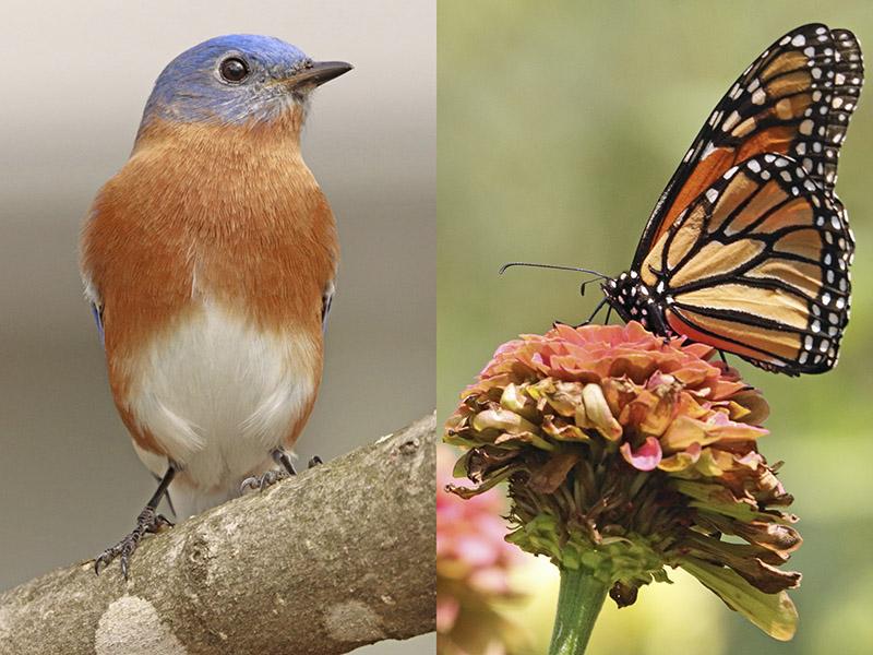 Birds and Butterflies: photography by Matthew Leavitt