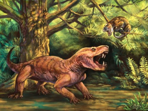 """Monstrous"" new Russian saber-tooth fossils clarify early evolution of the mammal lineage"