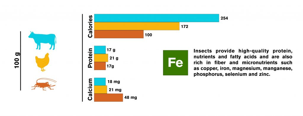 Nutrients per 100g of meat from cows, chickens and crickets.