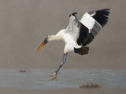 'Wildlife Art' featured at Museum's Nature Art Gallery in October