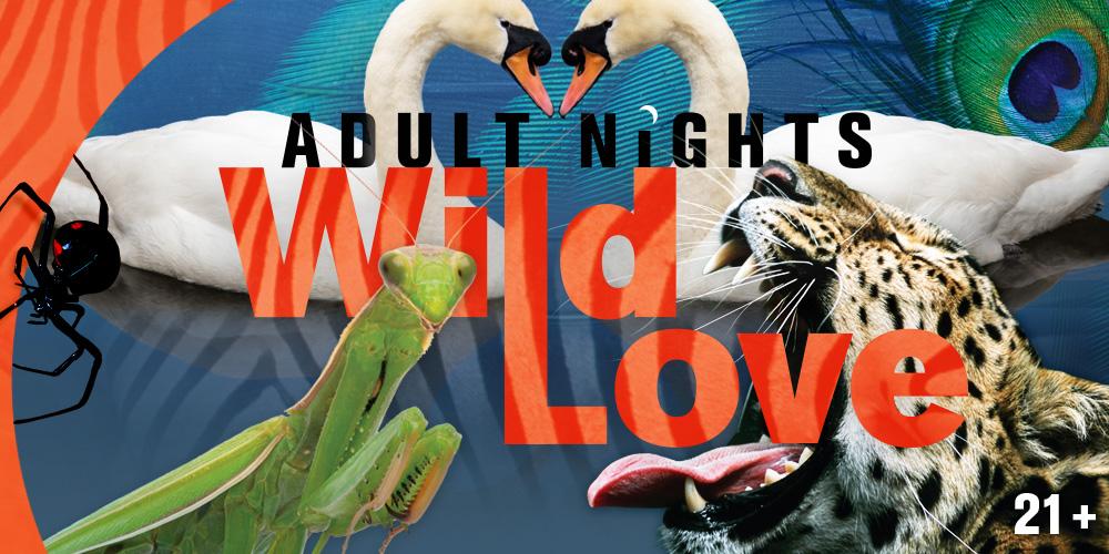 Adult Nights: Wild Love