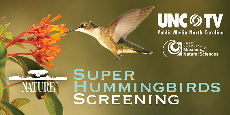 """NATURE: Super Hummingbirds"" screening, brought to you by UNC-TV and the NC Museum of Natural Sciences"