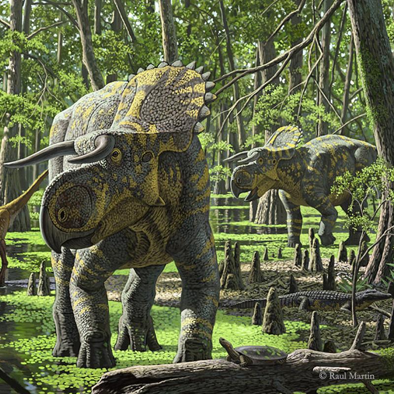 Nasutoceratops by Raul Martin.