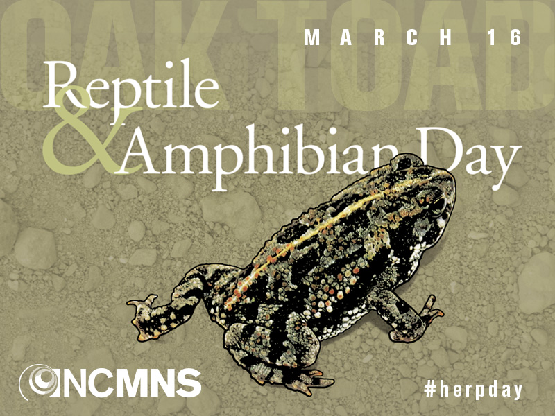 Reptile & Amphibian Day: March 16, 2019. #herpday
