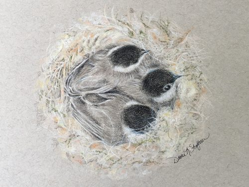 'Feathers and Fluff' by Dottie Shaftner opens at Museum's Nature Art Gallery April 5