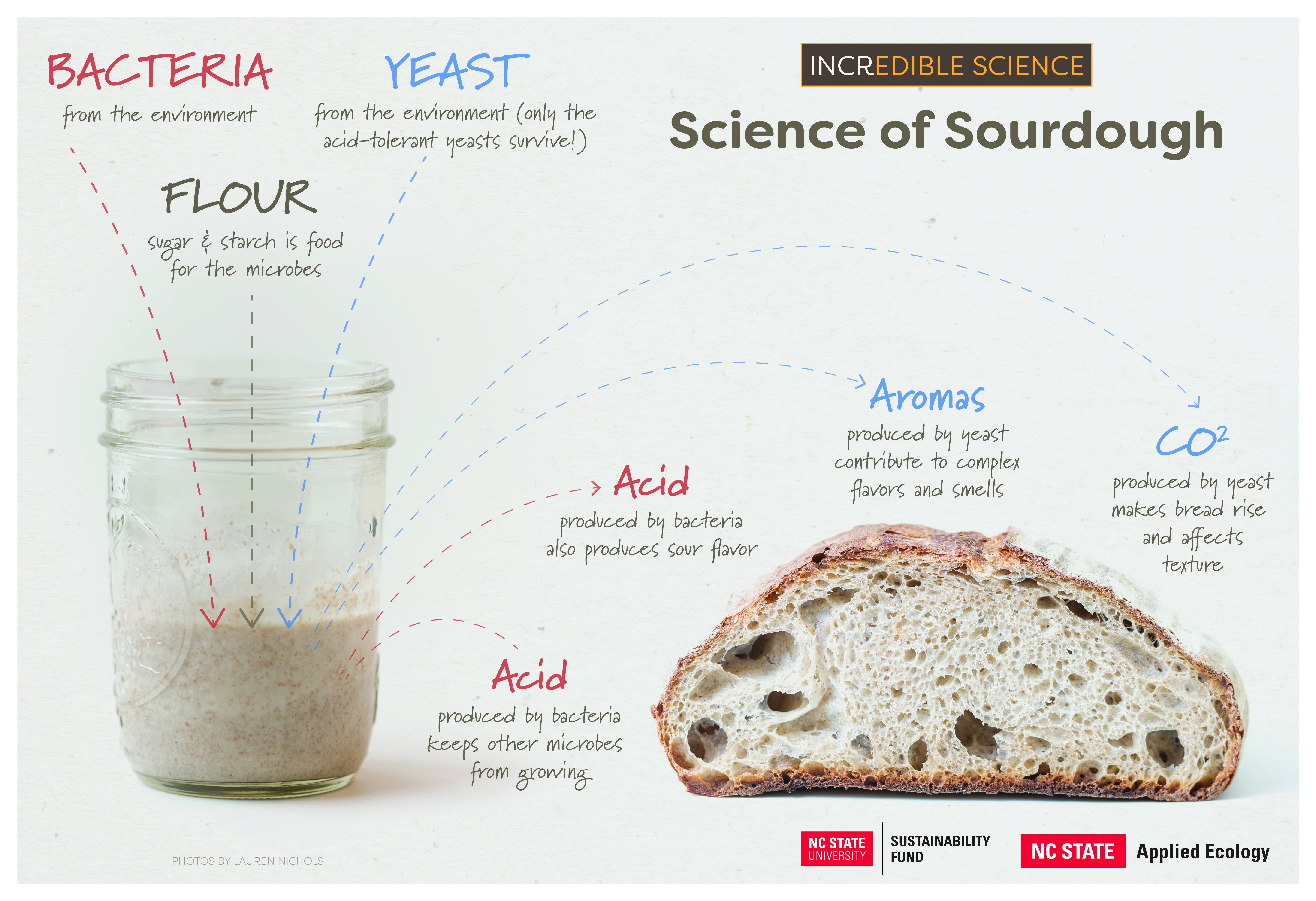 Science of Sourdough poster
