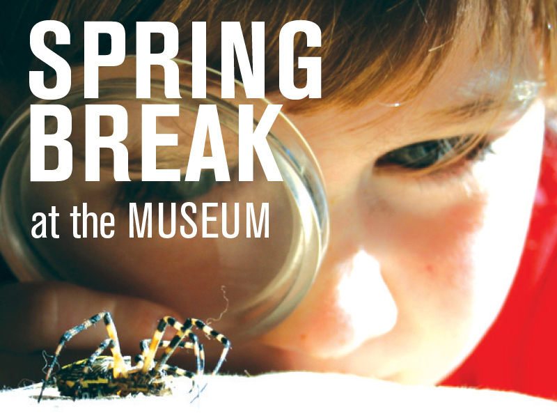 Spring Break at the Museum