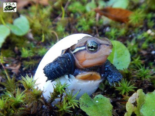 Turtle Conservation Worth Shell-ebrating