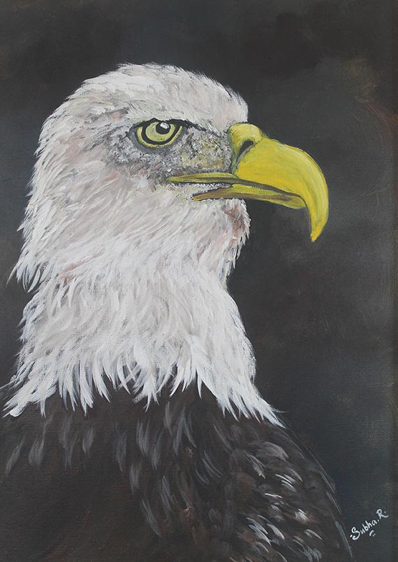 Bald Eagle by Subha Raghu.