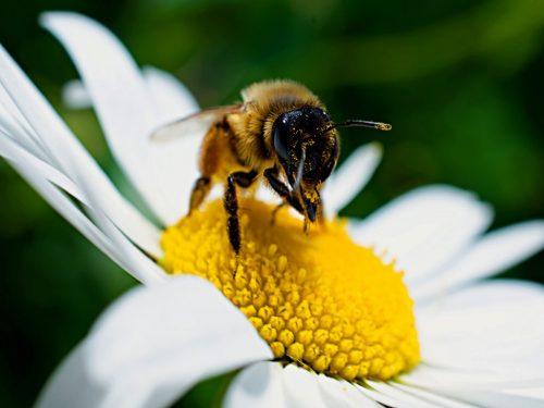 5 Ways to Help Pollinators in Your Own Backyard!