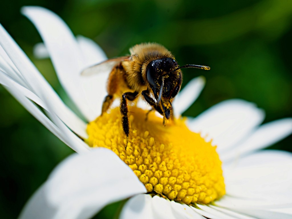There are may things you can do to defend bees, butterflies, beetles and other pollinators by planting a hospitable garden.