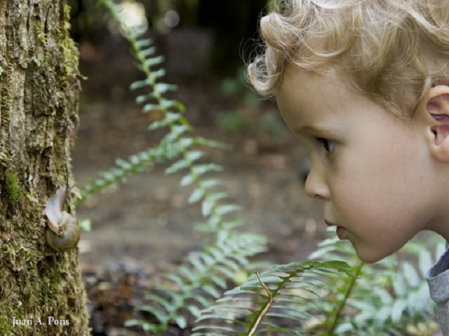 Child looking at snail.