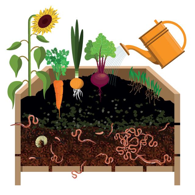 Vermiculture bin