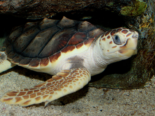 Composting Connections: Climate Impact on Sea Turtles